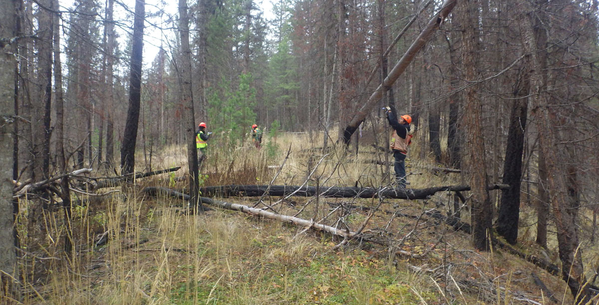 Archaeological Assessments for Forestry Developments in the Cariboo-Chilcotin Natural Resource District, on Behalf of BC Timber Sales.